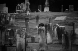 Center Cemetery with crow